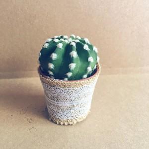 Mini Cactus detalle